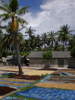 A Trip to Nusa Lembongan