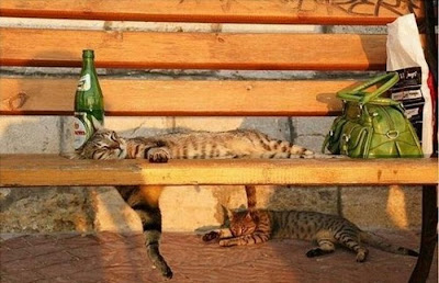 Best Of Cats Chillin' Seen On www.coolpicturegallery.us