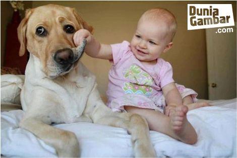 foto lucu hewan