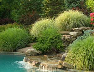 Arte y jardiner a el c sped y las plantas cubresuelos for Plantas decorativas ornamentales