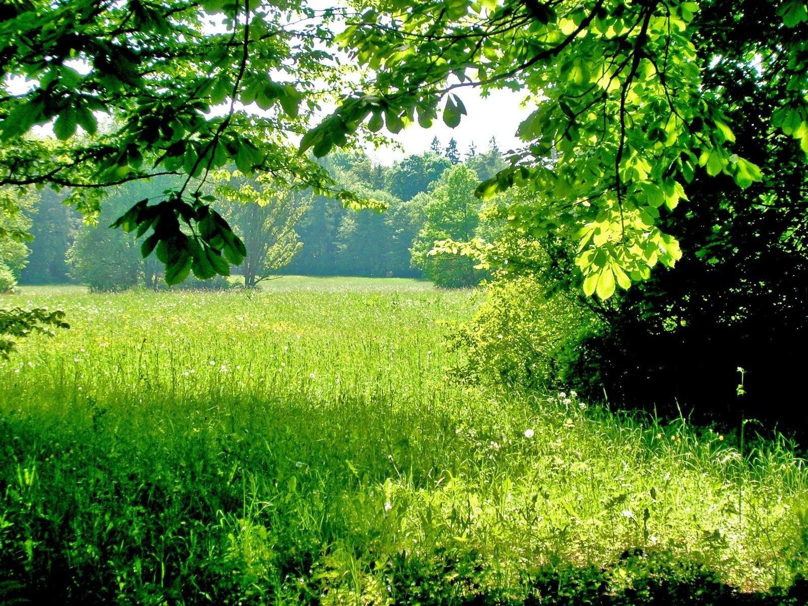 http://3.bp.blogspot.com/-BzP01lqMuPg/TjsrSle1fMI/AAAAAAAAAkc/areNG2YrjLk/s1600/Airena-high-resolution-wallpaper-49.jpg