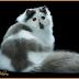 Tampak Gambar Kucing Lucu Yang Imut-Imut