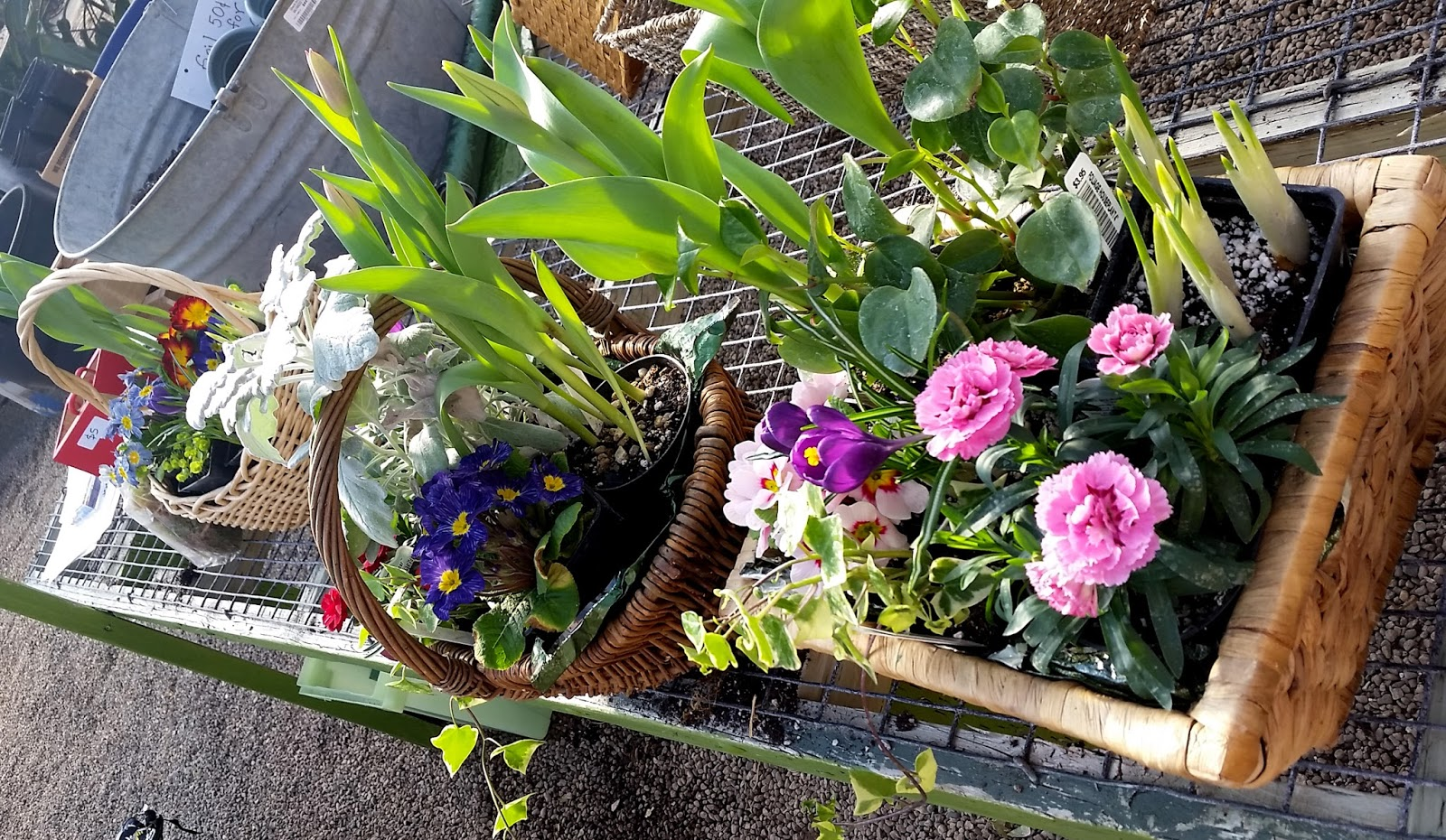 Edward's Greenhouse floral baskets
