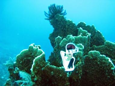 El catganer submergit a les aigües de les illes Gili