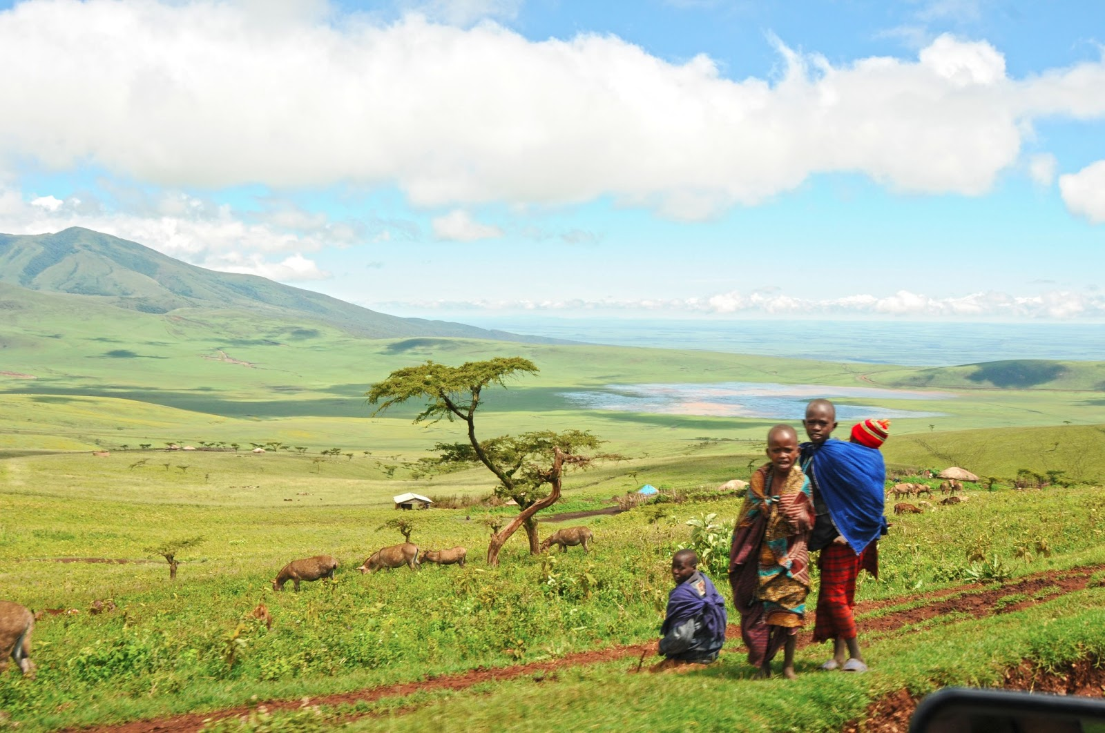 Anak-anak Maasai menggembala ternak nya