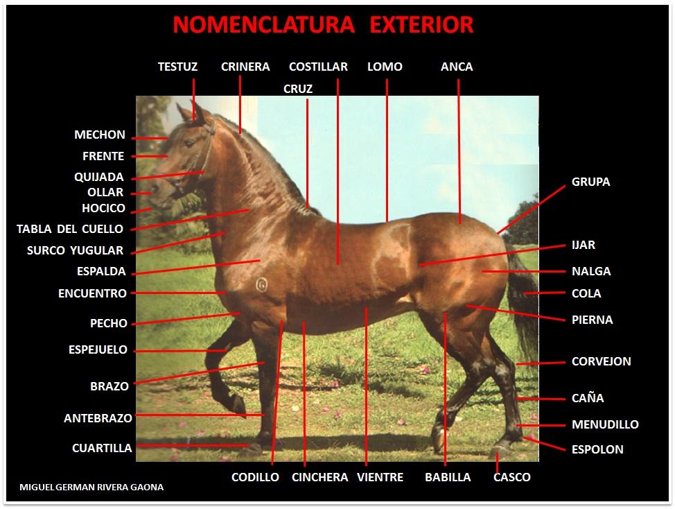EXTERIOR | MANUAL DE COJERAS EN EQUINOS