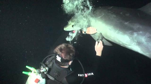 Delfin-enredado-hilo-pescar-buceador-rescatado