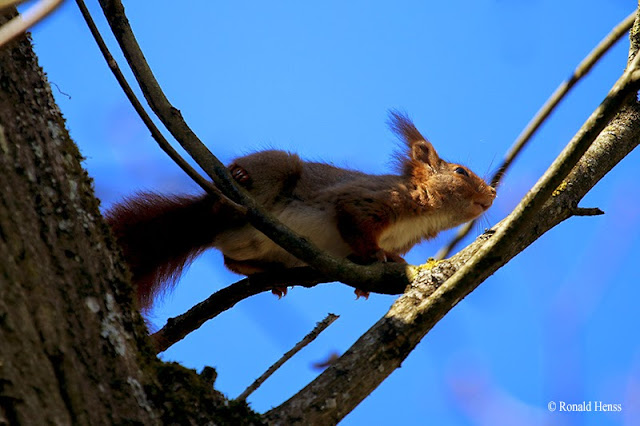 Tierfotos Nagetiere Eichhörnchen