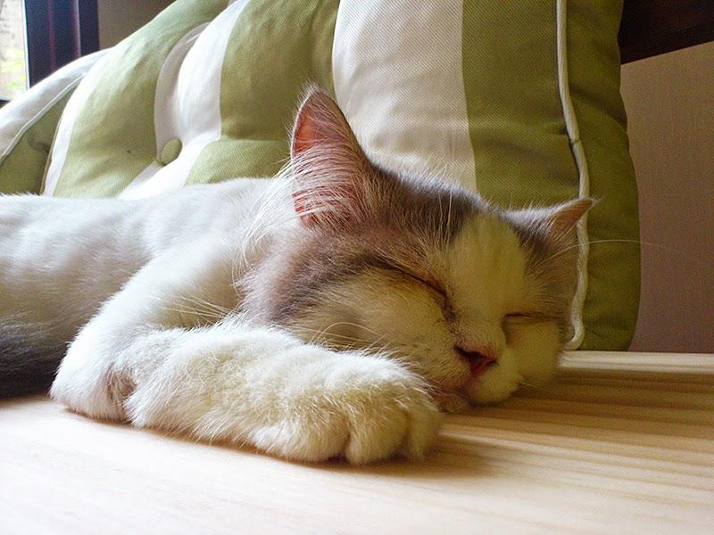 希望來巷口躲貓貓住宿的貓咪也能睡的這麼安穩