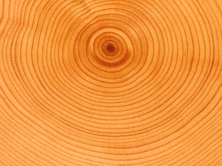 Wood Age Circles Close Up Texture HD Wallpaper