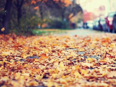 Autumn Season Standard Resolution Wallpaper 34