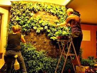 Menciptakan taman ditembok rumah maupun apartemen