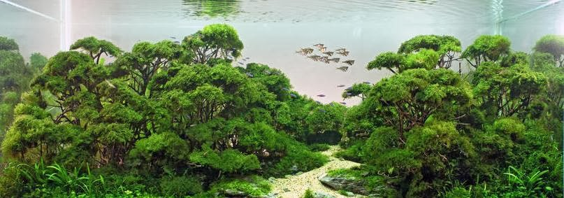 Arwana fish depok - Gambar aquascape ...