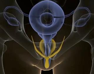 ... ://www.christopher.compagnon.name/sexualite/sexe_femme_clitoris.html