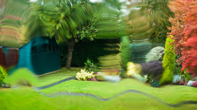 In my Mother's Garden, as Seen Through the Bathroom Window, Autumn 2011 © Graham Dew