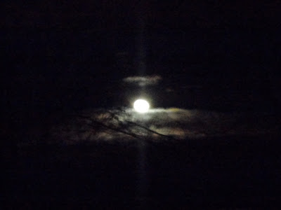 The Moon and Tree out my window