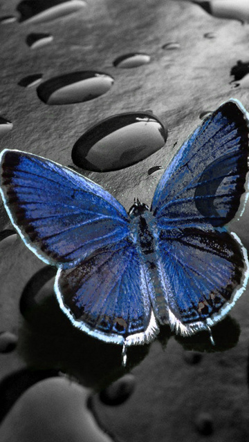 animated butterfly wallpaper for mobile phone