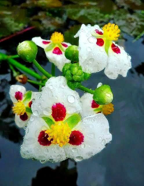 Bunga-bunga unik - Floria Relaks Minda