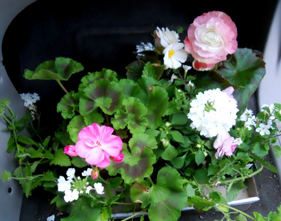 Scrappy Happy Starfishy: Make a Hanging Flower Basket