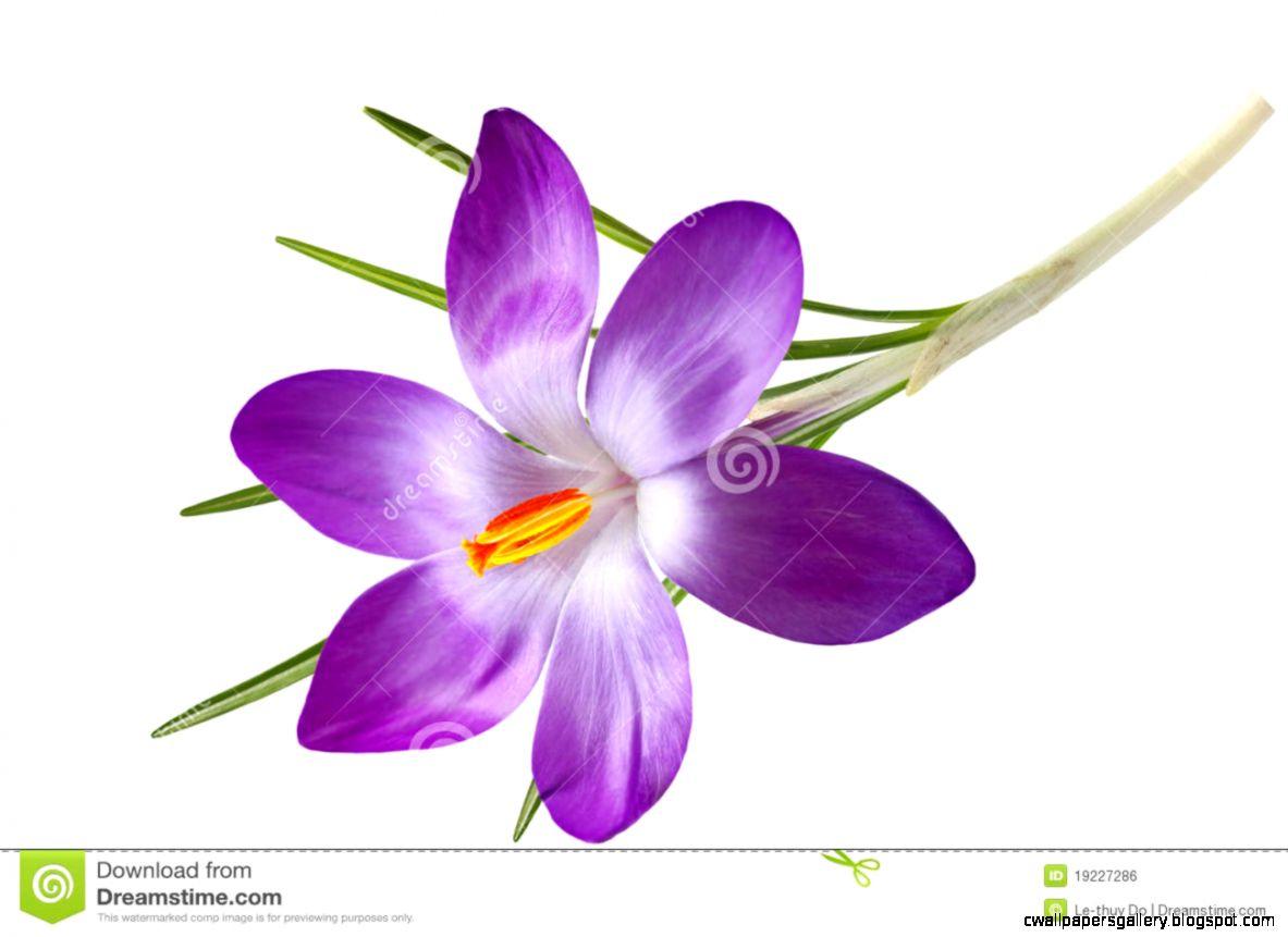 Single Purple Flower Clipart