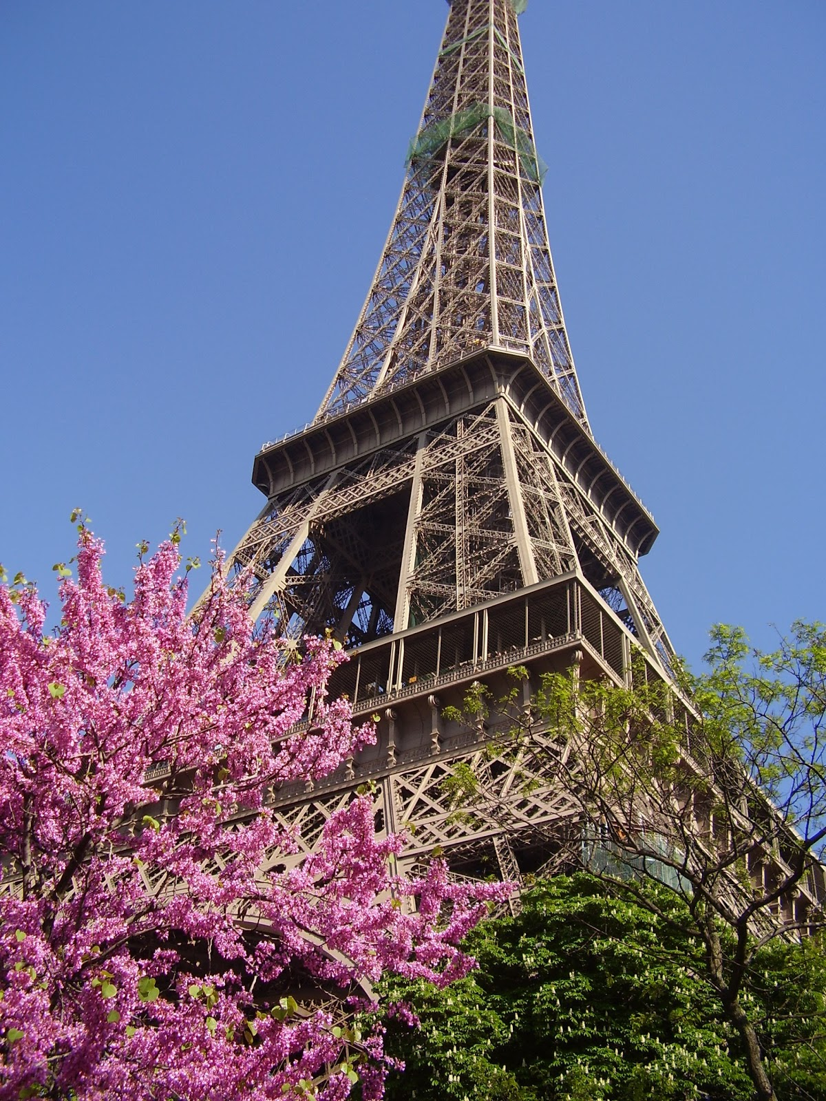 Pretty Pink Paris Purple Chocolat Home