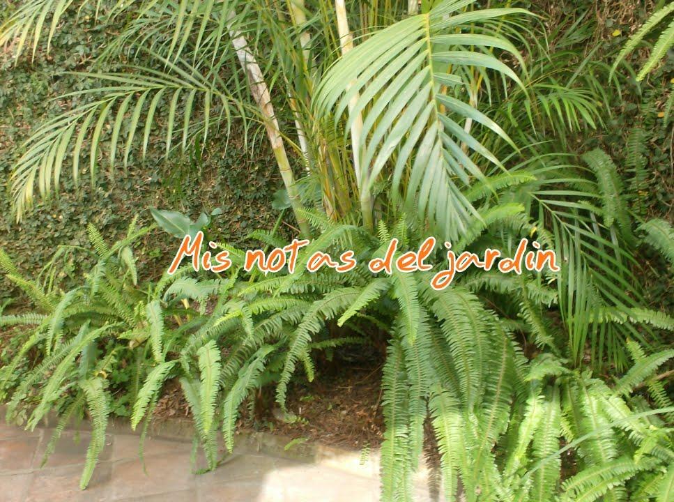 Mis notas del jard n rbol de banano como planta for Banano de jardin