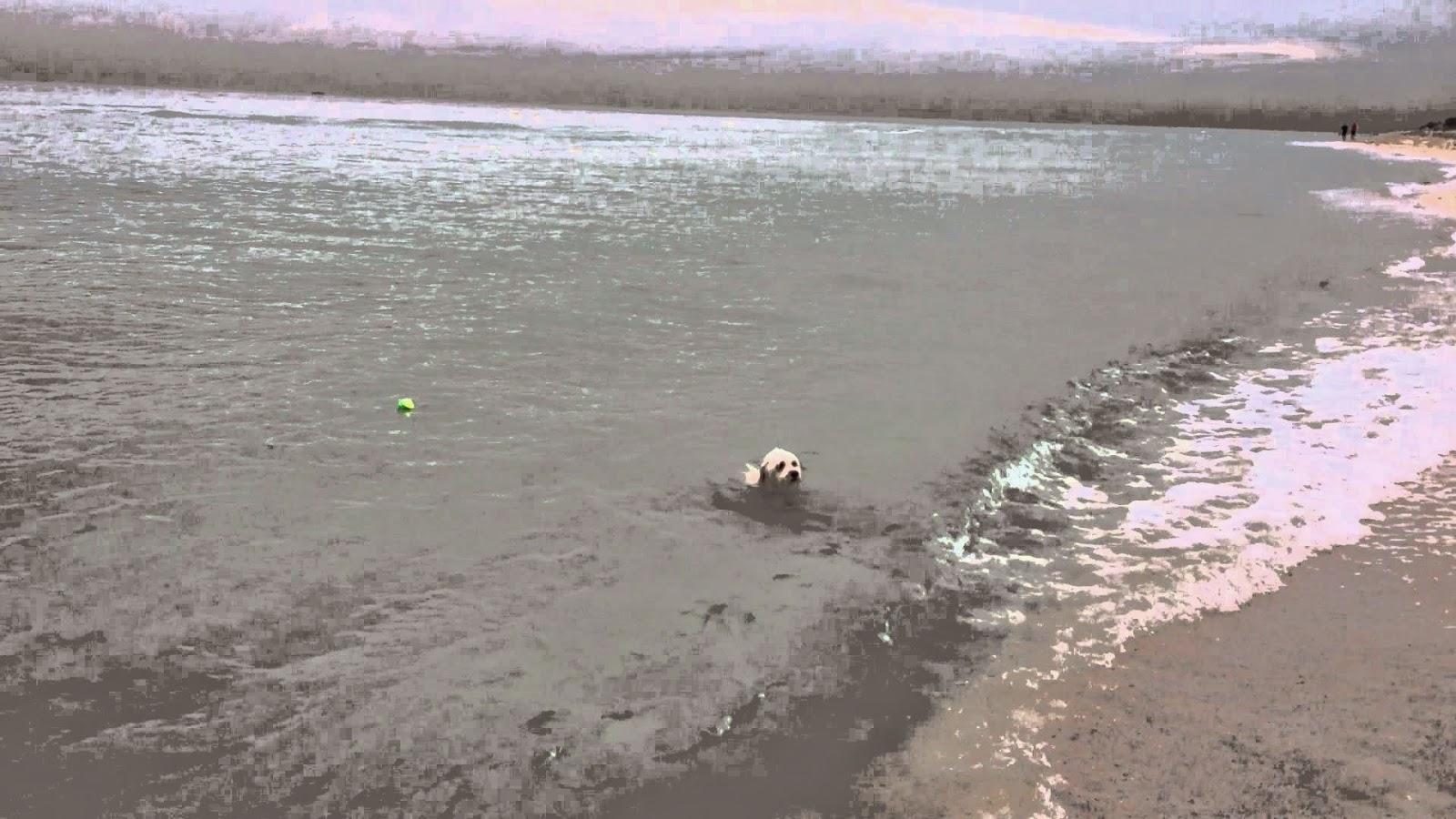 En la playa con nuestro perrito