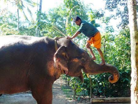 cornak mahout kerala