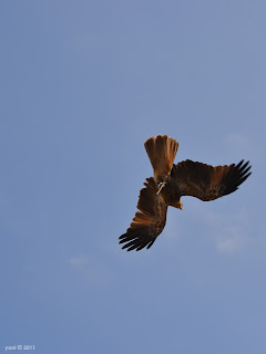 acrobatic flyer