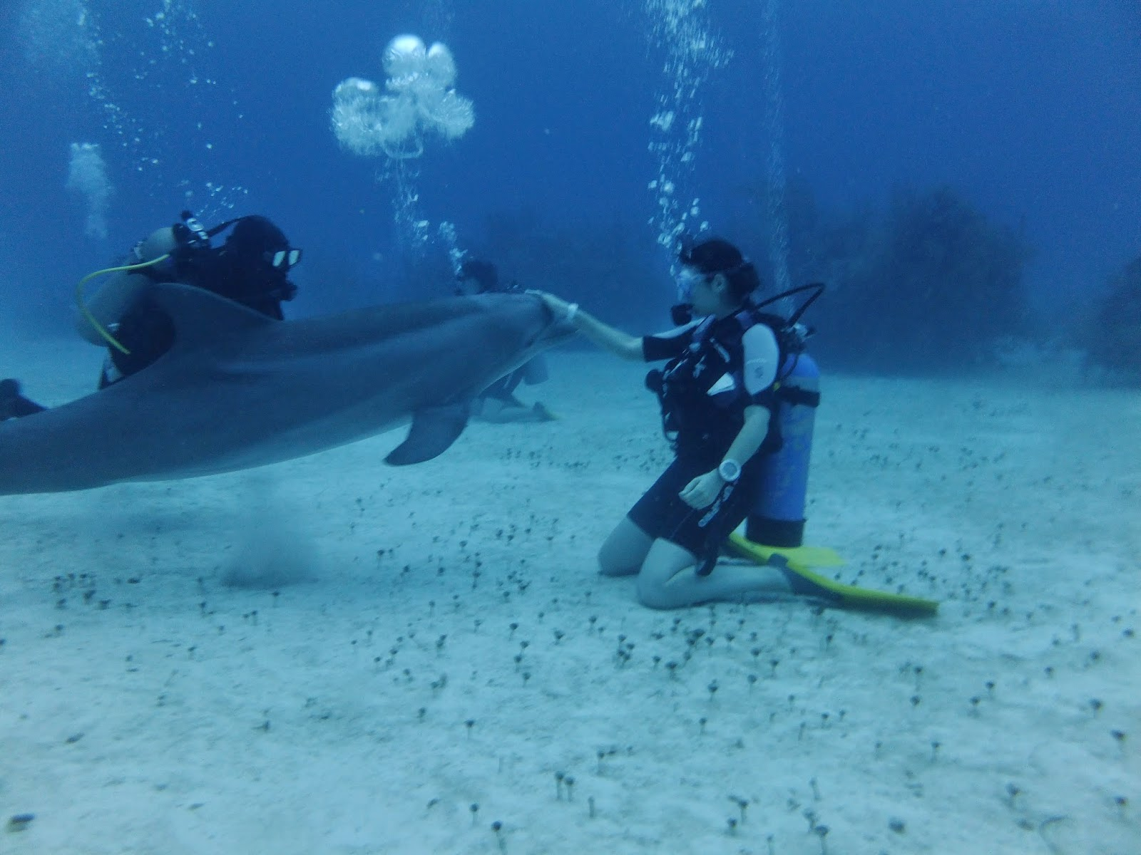 S verine plongeuse et voyageuse a quoi s 39 attendre aux bahamas for Nager avec les dauphins nice