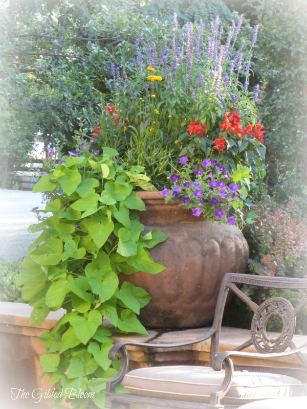 patio container garden gb