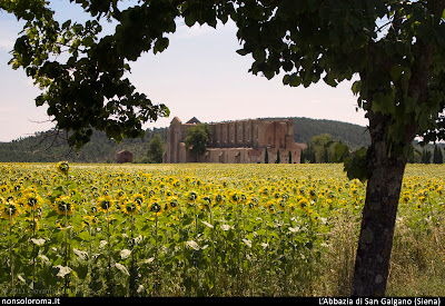 Fotografia dell'Abbazia di San Galgano circondata di girasoli