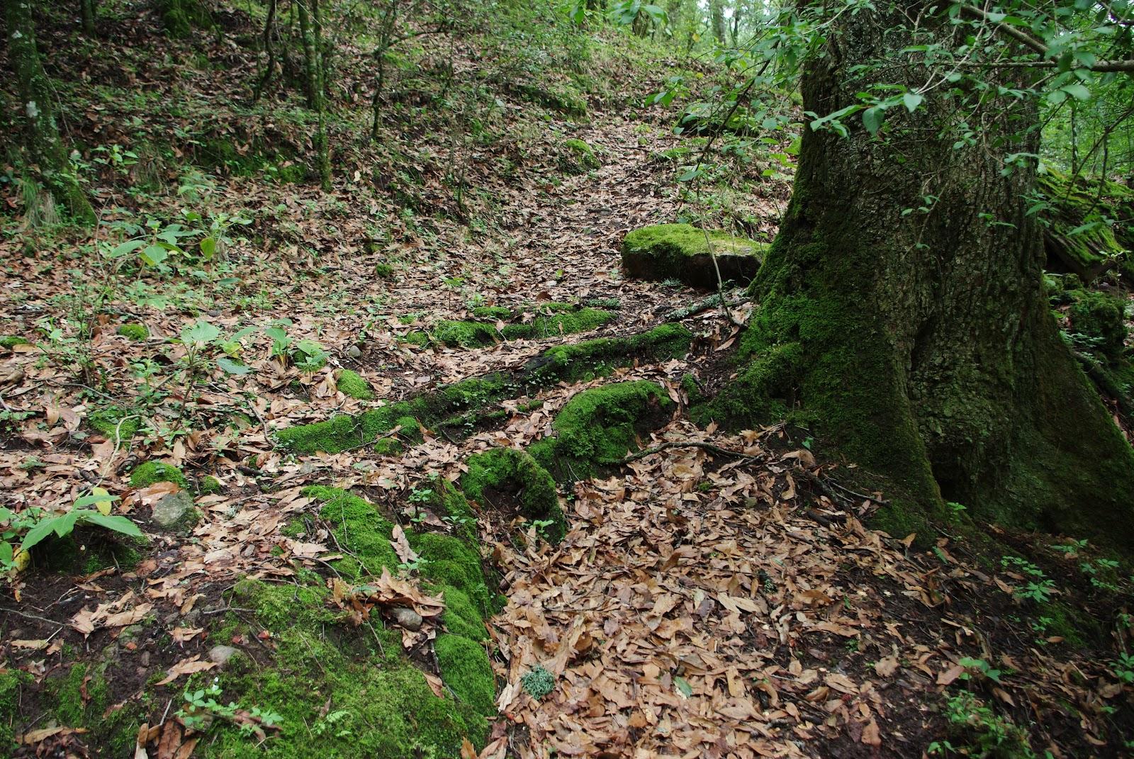 Ecosistemas urbanos sostenibles el suelo de conservaci n for Suelo besar el suelo xd