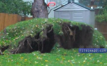 pokok besar tumbang taufan sandy