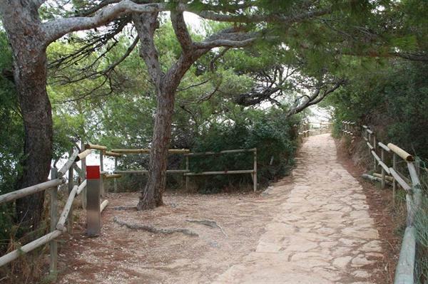 Senda de los pinos tumbados efecto bandera en Ifach