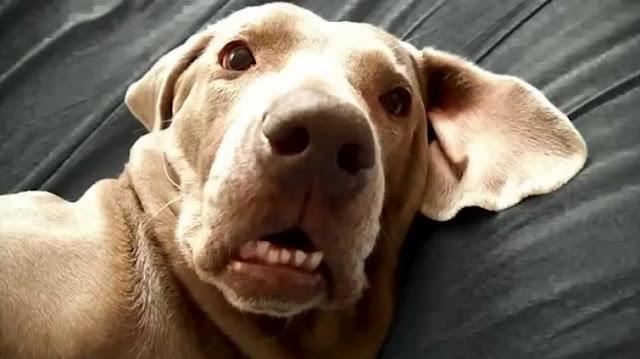 Perros asustados graciosos