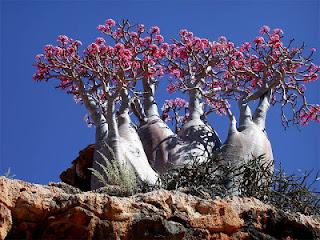 Socotra - 9 tempat paling pelik di dunia