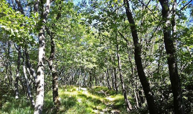 Lady mendrisiotto istruzioni d 39 uso per passeggiate nei for Cabina innevata nei boschi