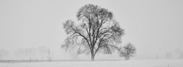 Brume, Brumal, Brumous, Snow