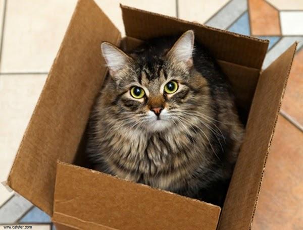 Photo chat mignon dans la boite