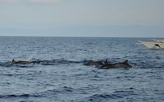 Panglao Dolphin Watching