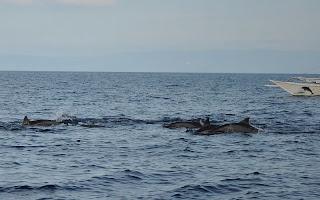 Panglao Dolphin Watching