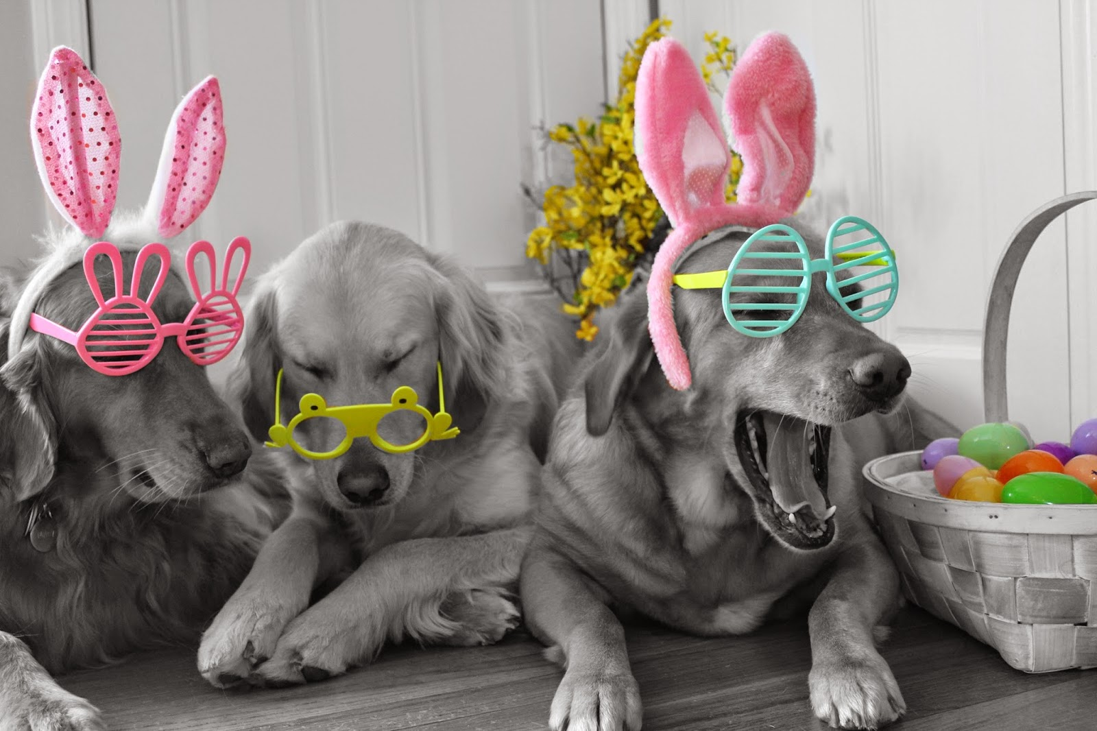 dogs wearing bunny ears and glasses for easter