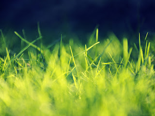 Green Grass wallpaper