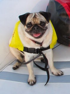 PUG BECOMES NAVY SEAL