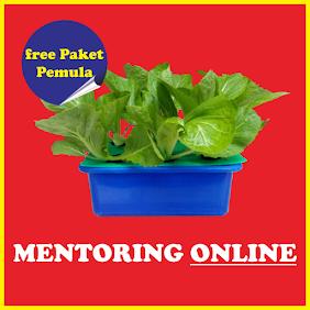 pelatihan hidroponik online