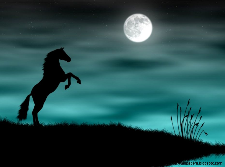 Black Horse Hd Wallpapers Images Cool 1024x768PX  Horse