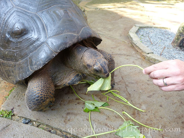 Blue Turtle Cafe