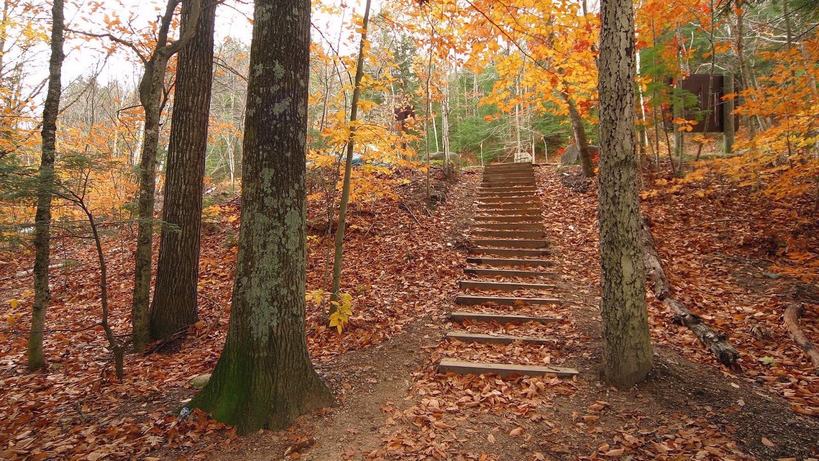 Achtergrond met trap in een bos