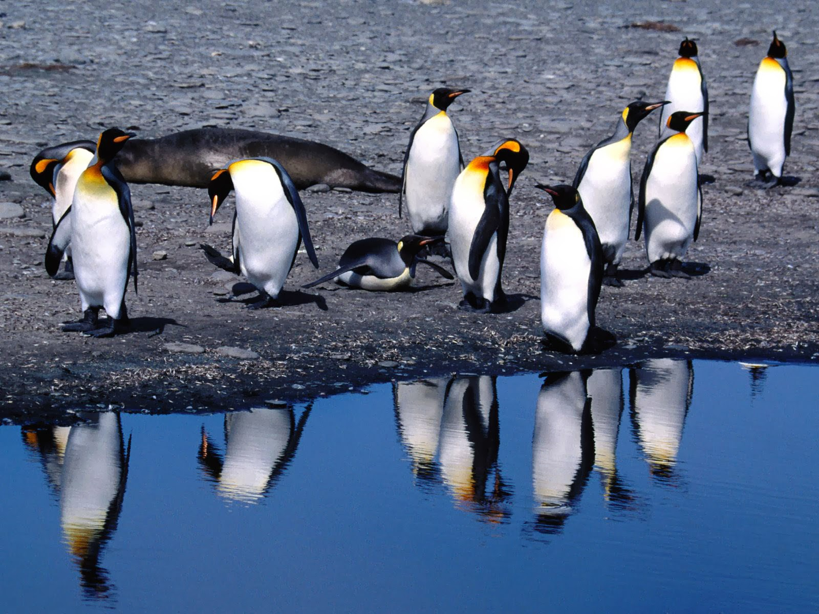 penguin wallpaper wallpapers - photo #38